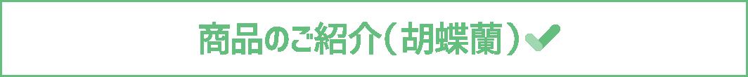 商品のご紹介(胡蝶蘭)