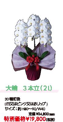大輪 3本立(2L) 特別価格¥19,800(税別)