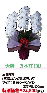 大輪 3本立(3L) 特別価格¥24,800(税別)