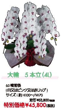 大輪 5本立(4L) 特別価格¥45,800(税別)