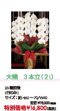 大輪 3本立(2L) 特別価格¥16,800(税別)